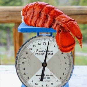 Huge Lobster Tails